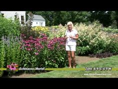 Flowers to grow for height in the garden, tall plants for flower borders. | hubpages