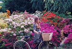 Azaleas #flowers #pink #yellow #bicycle #spring