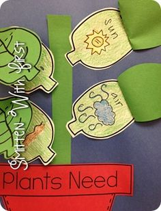 Plants needs chart preschool