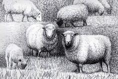 Risultati immagini per sheep drawing