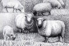 Henry Moore: Sheep Drawing 4