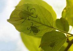 Natural Pesticides: Recipes & Tips