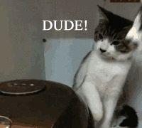 Curious cats - Imgur http://imgur.com/gallery/DYBc88m