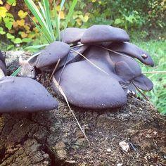 #ira_belka_art #autumn #stupino #mushrooms  А может со мной не все так безнадёжно и я, хотя бы немного, умею фотографировать? Творческие люди очень странные, даже слишком странные Фотографировать грибы♀️ Нет! Я ничего перед этим не употребляла! Просто был хороший день и мы с племянником возвращались из школы