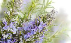 Rožmarin se za lajšanje prebavnih težav in za pomiritev živcev uporablja že stoletja. Je zdravilna rastlina, ki ji pripisujejo blagodejne učinke tudi pri izgorelosti in onemoglosti, pri nespečnosti in pri nekaterih vrstah migrene.