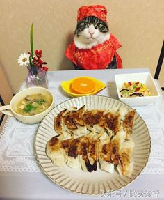 Feline Culinary Photoshoots Maro the Cosplay Chef Cat Combines Genuine Meals and Outfits (hotnewstrend) Funny Cat Videos, Funny Animal Pictures, Funny Cats, Cute Baby Animals, Animals And Pets, Funny Animals, Funniest Animals, Cool Cats, I Love Cats