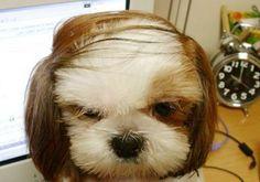 Come 'azz li porti sti capelli...?!