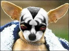 Member of the KISS Army