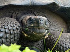 Muchas de las especies descubiertas en 2015 están en peligro crítico de extinción