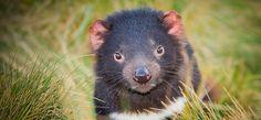 Devils@Cradle - Tasmanie - AUSTRALIE - My Bubbles World « My Bubbles World