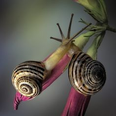 Snails in love. Door communitylid jimhoffman - NG FotoCommunity ©