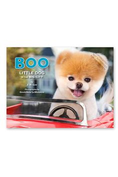 My mother is obsessed with this dog...some day I'm afraid I'll walk in her door and she'll have her very own Boo dog!