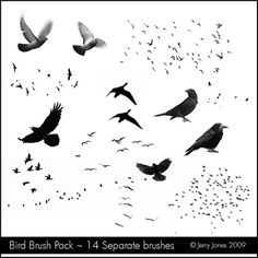 Bird Brush Pack | For those inquiring about my bird brushes,… | Flickr