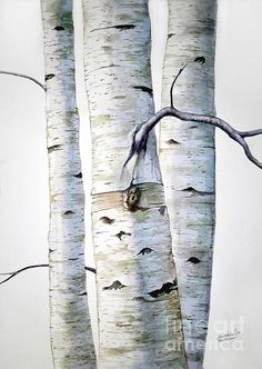 Beautiful super large watercolor painting of Birch trees. Available in print. Check it out!, or go to http://christophershellhammergallery.com