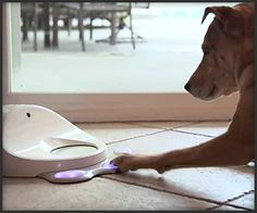 CleverPet is an interactive device that keeps your dog entertained by stimulating its mind and dispensing food as a reward. Fill it up with dry dog food and its software will run your dog through . Dog Games, Couch Cushions, Pulsar, Mind Games, Dry Dog Food, Mans Best Friend, Pet Care, Doge, Inventions