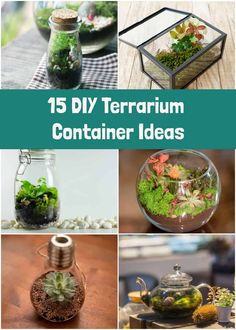 DIY Terrariums: Everything You Need To Know To Build Your Own Plant Terrarium – Cool Office Space Mini Terrarium, Build A Terrarium, Terrarium Containers, How To Make Terrariums, Terrarium Plants, Glass Terrarium, Making A Terrarium, Succulent Terrarium Diy, Small Plants