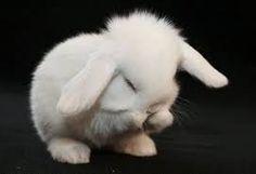 animais engraçados tumblr - Pesquisa do Google