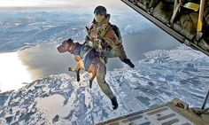 Skydiving bomb-sniffing dogs. Nothing is cooler.