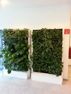 FH Burgenland Flora, Green Architecture, New Green, Terrace, Rooms, Outdoor Structures, Interior, Wall, Plants
