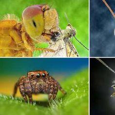 Macrofotografia revela animais em close up extremo  http://a.msn.com/01/pt-br/AAdBCA1