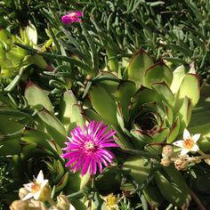 Fleur De Ton Jardin – Idée d\'image de fleur