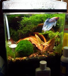 Cool example of DIY ingenuity. The tank shown is actually a modified 1.5 tetra cube.
