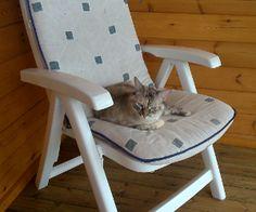 Gatos bonitos Chair, Animals, Furniture, Home Decor, Funny Animal Humor, Kittens, Funny, Friendship, Animales