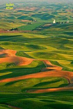 Fantastic greenish field's Washington, USA