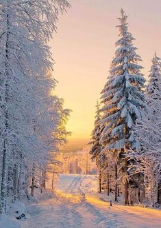 A beautiful winter landscape with lots of snow. Winter Photography, Nature Photography, Winter Scenery, Winter Sunset, Alaska Winter, Winter Love, Winter Magic, Snow Scenes, Winter Beauty