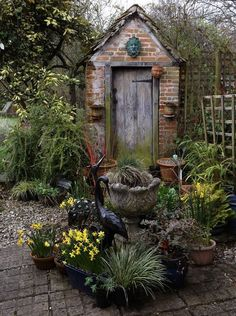 A perfect English, container garden on a lovely Welsh lady's gardening blog.