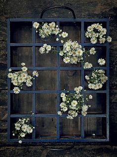 Margaridas no vidro dentro de um engradado