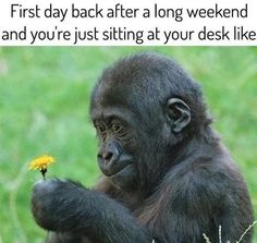 When You're Back At Work  http://funphotololz.com/funny/when-youre-back-at-work/