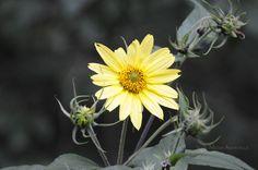 Flower in Pisgah Forest