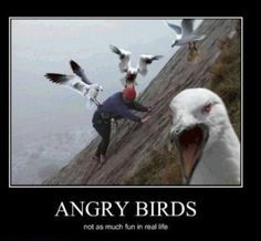 For Damon who loves Angry Birds and Amy who hates angry birds.