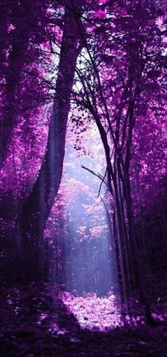 forest in early morning purple mist