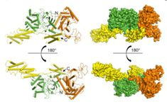Structural basis of ubiquitin modification by the Legionella effector SdeA - http://www.bioadvisers.com/categorybioresearch/