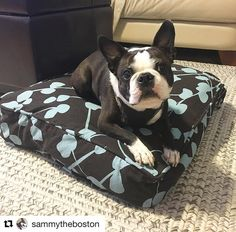 A little frenchie for you Wednesday evening enjoyment. #patternplay  your hand in mine duvet #mykindofnap #abedoftheirown #pillowpup #dogbed #dognap #fb #Repost @sammytheboston  Relaxing on my @molly_mutt bed