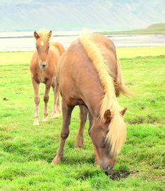 Mare And Foal by Hilde Widerberg