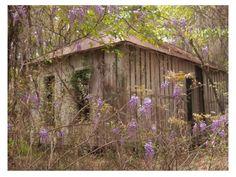 Suwannee Springs Suwannee River , Florida 1890 cabin