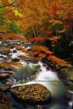 Smokies... CanNOT wait to head here in the fall with Granna and Papa!