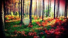 beautiful forests - Google Search Beautiful Forest, Forests, Vineyard, Game, Google Search, Outdoor, Outdoors, Woodland Forest, Vine Yard