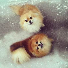 Pommies in the snow!