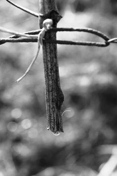 Vigne en pleur #Domaine #Brand&Fils #Alsace
