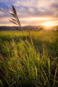 """Meadow Light"" by Chad Dutson Star Valley, Wyoming, USA Beautiful sunset light cast over Idaho and Wyoming's Star Valley. Photo Background Images, Photo Backgrounds, Beautiful Sunset, Beautiful Places, Landscape Photography, Nature Photography, Photography Ideas, Star Valley, Fields Of Gold"