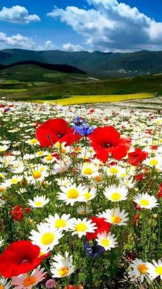 27 Super Ideas For Landscape Flowers Photography God All Nature, Flowers Nature, Amazing Nature, Wild Flowers, Beautiful Flowers, Spring Flowers, Field Of Flowers, Belle Photo, Nature Photos