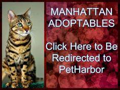 Manhattan Urgent Shelter Cats_Please watch all Urgent Shelter Cats !