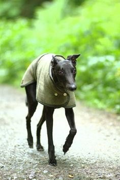 A beautiful whippet coat, waterproof and available in stunning red or classic tweed.One size fits all. Available in Red or Tweed, both waterproof and machine washable.Stylish, machine washable, and waterproof this Whippet coat is perfect for frosty winter walks in the town or countryside. Especially designed to fit the Whippet's unique frame, ensuring a perfect fit. If you do not want to have to choose between style and practicallity for your Whippet's winter coat, then this is for you. ...