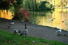 We used to always feed the ducks..but you can't now...:(