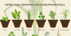 Anyone Can Grow Herbs With This Super-Helpful Chart ! This will be the year you finally get it right.