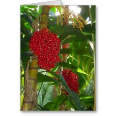 Red Berry Orchid Card http://zazzle.com/rinchen365flower*  #card